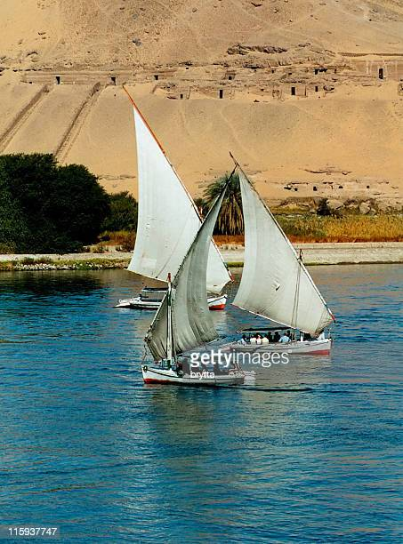Sailing felucca boats