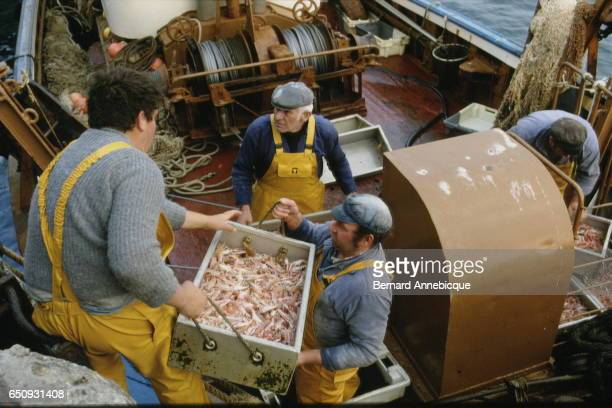 Sailors helping each other pull cases off a fishing boat | Location Brittanny France