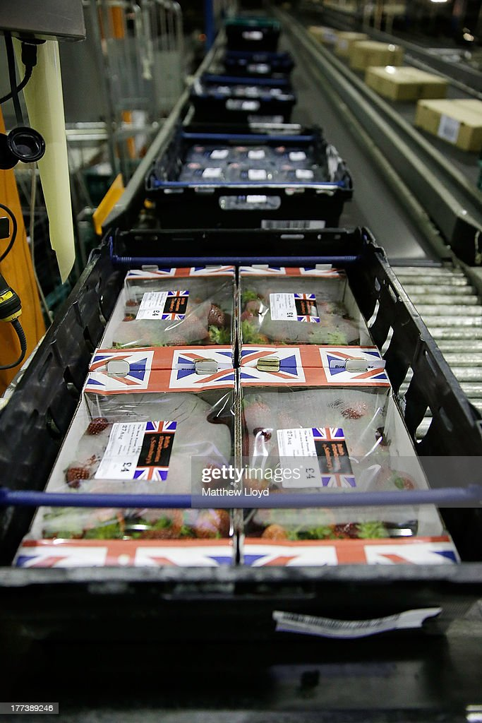Sainsbury's expects to sell 500,000 punnets of strawberries this weekend at the Sainsbury's infrastructure at Waltham Point Depot on August 22, 2013 in Waltham Abbey, England.