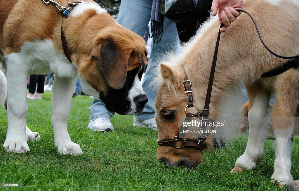 "The ""Woofstock 90210"" Pet Show In Beverly Hill 