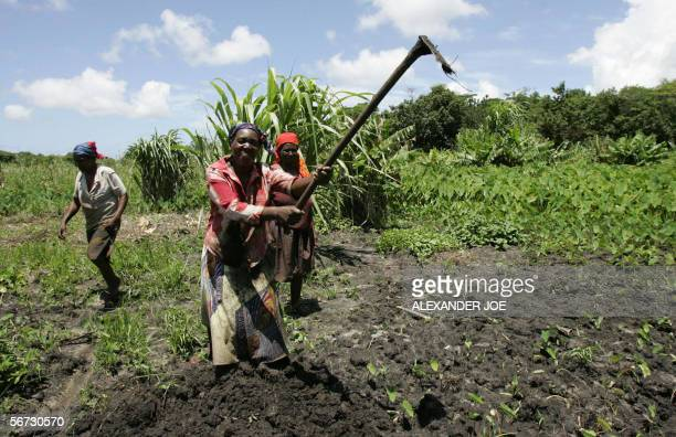 South African farmer women work the swamps planting anything from bananas to sweet potatoes or spinach One of Africa's biggest and endangered wetland...