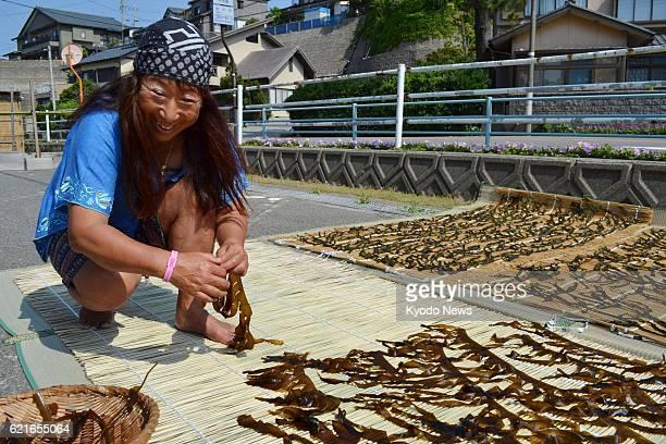 Sakai Japan Female fishing diver Nayomi Oi spreads out wakame seaweed she caught in Sakai Fukui Prefecture in May 2013