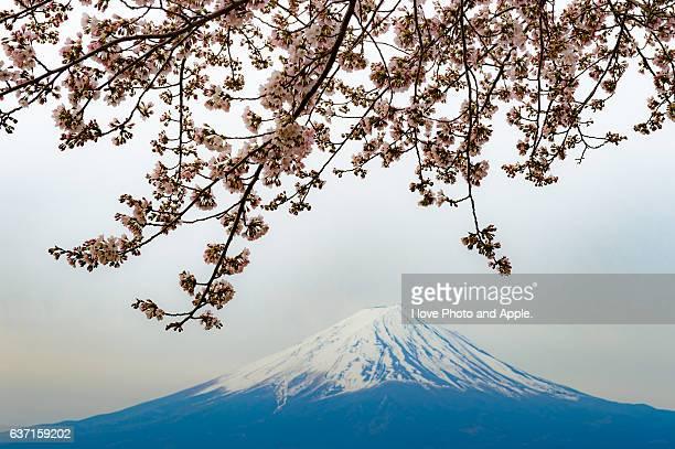 Sakura and Fuji