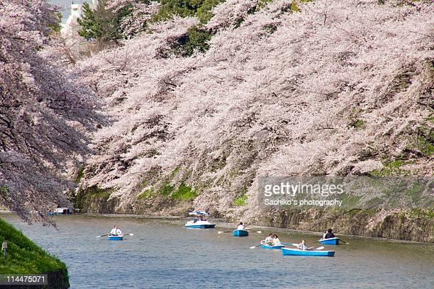 Sakura & boats