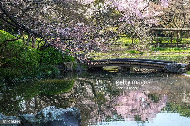 Sakura Cherry Blossoms at Imperial Palace East Gardens made up of the Honmaru and Ninomaru areas of Edo Castle None of the Edo Castle buildings...