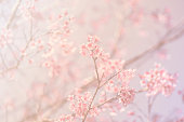 Blurred of Sakura flowers blooming. in the pastel color style for background.
