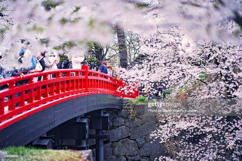Sakura Matsuri Hirosaki
