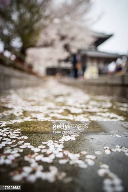 Sakura season in Nara