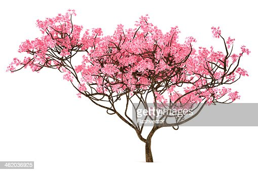 how to add cherry blossom effect to a picture