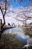 Sakura Vista