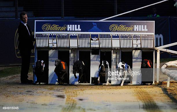 Salad Dodger breaks from the traps to win The William Hill Greyhound Derby at Wimbledon Stadium on May 31 2014 in Wimbledon England