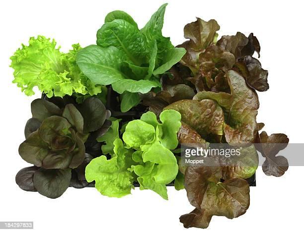 Salade de légumes verts.