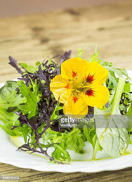 Salad made of wild herbs garnished with blossom of Indian cress