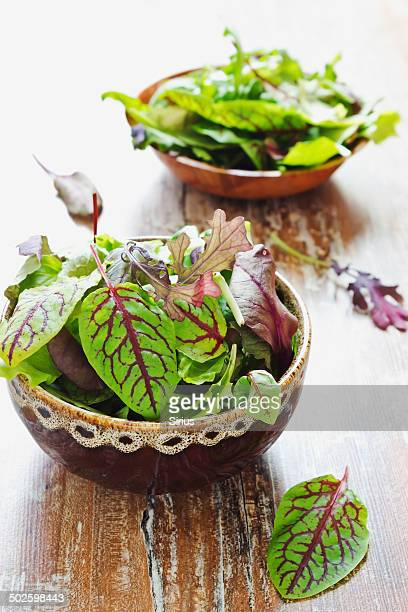 salad of sorrel, arugula and spinach