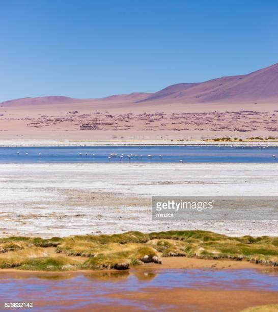 Salar de Tara dans la réserve nationale Los Flamencos, désert d'Atacama, Chili