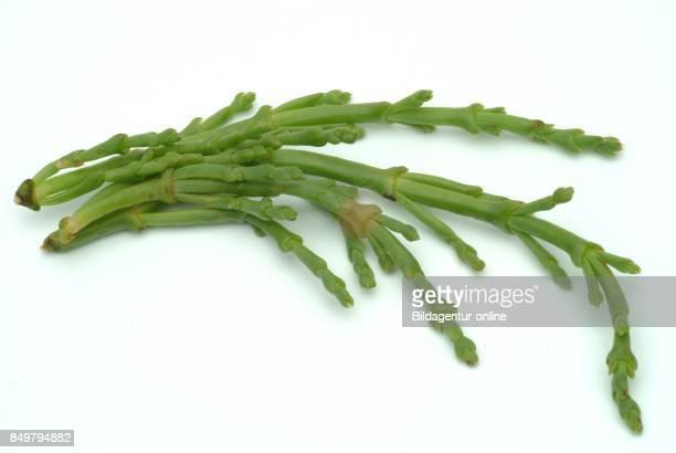 Salicornia is a Genus of Succulent Halophyte Flowering Plants Common Names Glasswort Pickleweed Marsh Samphire Sea Beans Samphire Greens Or Sea...