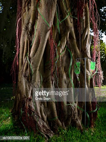 Saline IV bag on stand by tree : Stock Photo