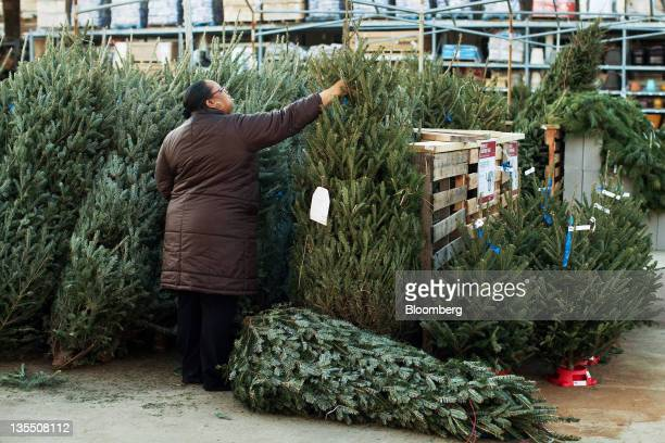 Sally Pacheco shops for a Christmas tree in the garden center of a Home Depot Inc in Newark New Jersey US on Saturday Dec 10 2011 Sales at retailers...