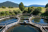 Chinook/King Salmon aquaculture in landscape of the Southern Alps mountains in New Zealand.