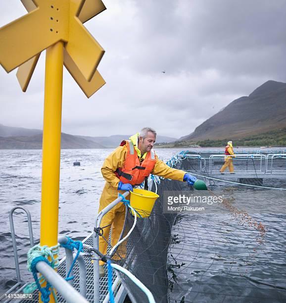Salmon farmers feeding fish on pontoon of Scottish salmon farm over sea loch