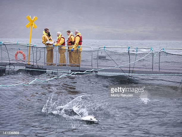 Salmon farmers on pontoon of Scottish salmon farm over sea loch