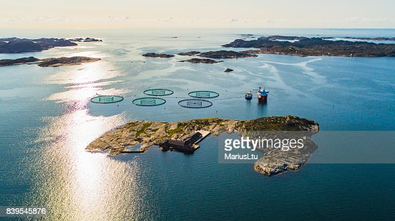 Salmon fish farm. Bergen, Norway. : Stock Photo