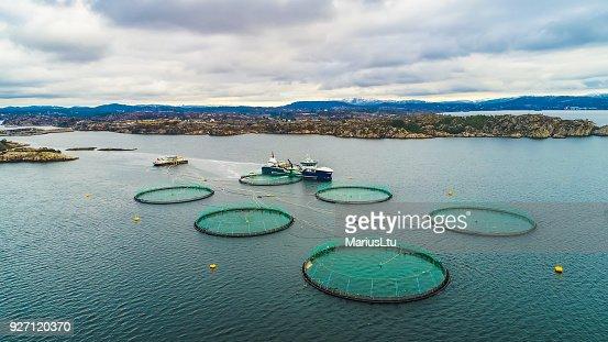 Salmon fish farm. Bergen, Norway. : Stock Photo