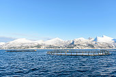 Salmon farming i in the Bergsfjord at Senja in Northern Norway (mariculture).