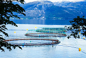 Fish farm situated in one of the fjords of Western Norway marked with yellow boyes