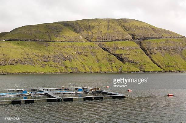 Salmon fisheries Faroe Islands