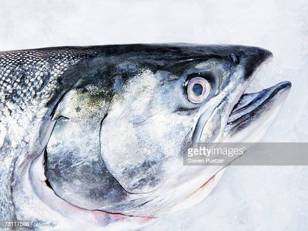 Salmon on ice, close-up of head