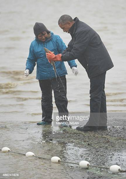 A salmon sprays US President Barack Obama as he picks it up while meeting with local fishermen and their families on Kanakanak Beach in Dillingham...