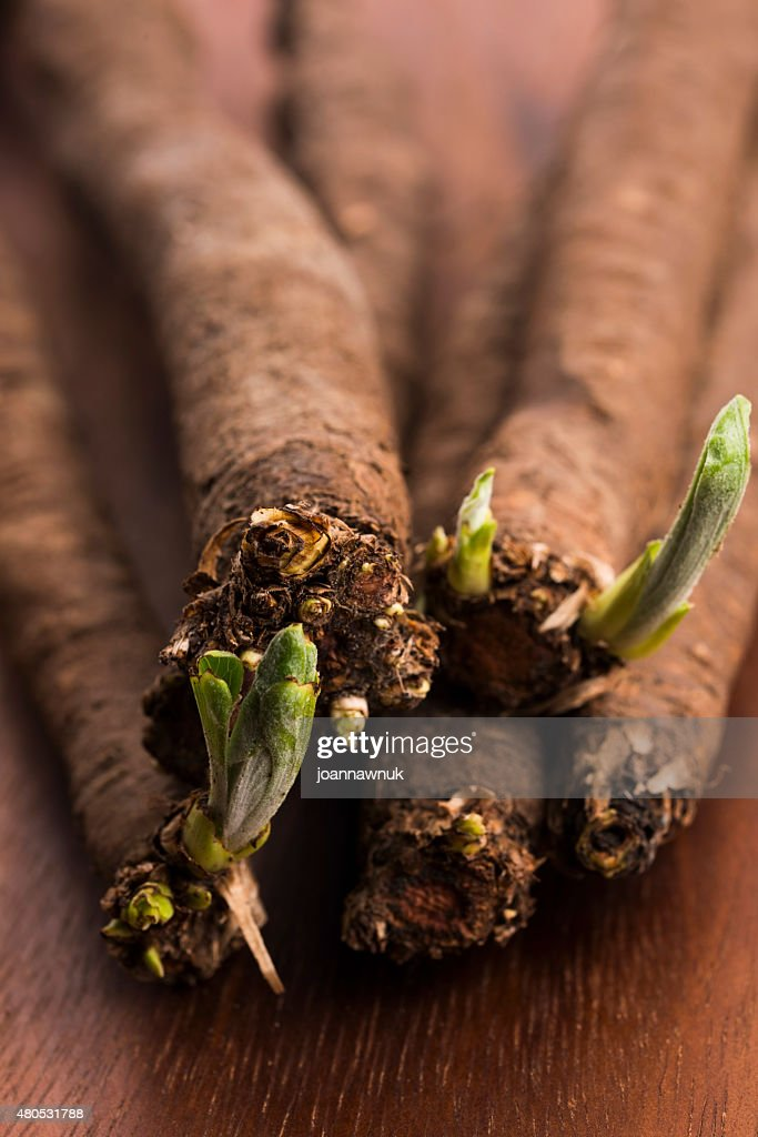 salsify vegetables on wood : Stock Photo