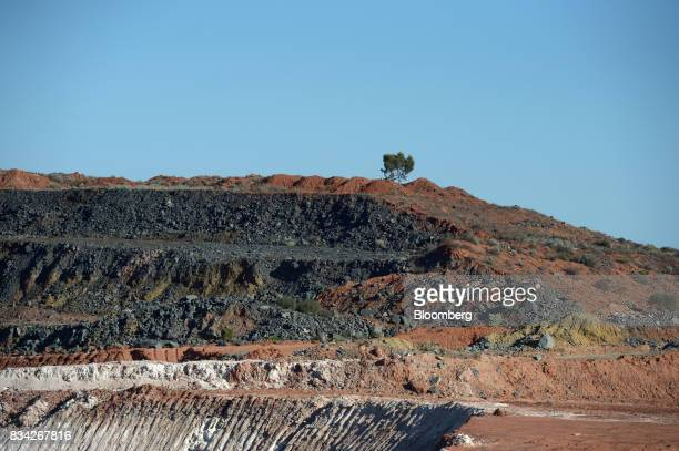 A salt bush sits on the lip of the White Foil open pit mine at Evolution Mining Ltd's gold operations in Mungari Australia on Tuesday Aug 8 2017...