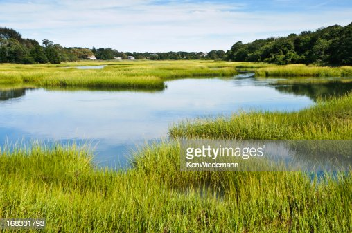 Salt Marsh at Full Tide
