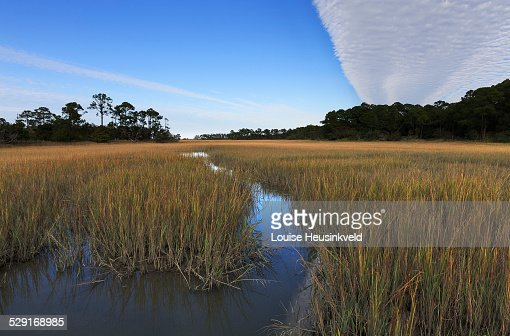 Salt marsh at Hunting Island State Park