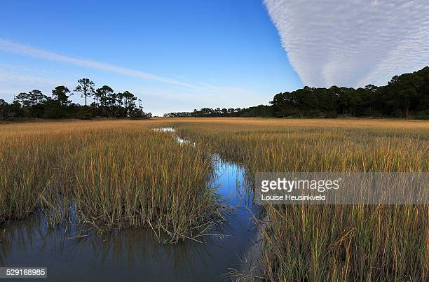 Salt marsh at Hunting Island State Park