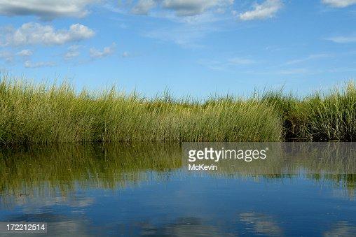 Salt Marsh with grassy riverbank