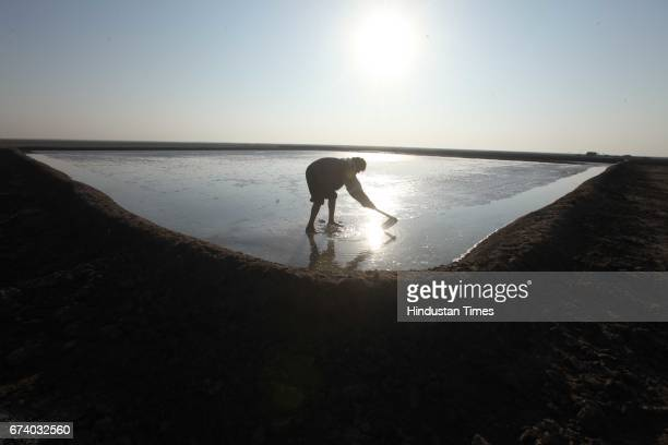 Salt Pan workers working in sunny day without resources around in order to make the land hard for the salt pans workers walk bare feet giving rise to...