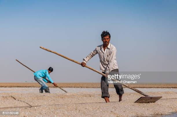 Salt workers on the Little Rann of Kutch, salt pans near Dhrangaghra, Gujarat, India
