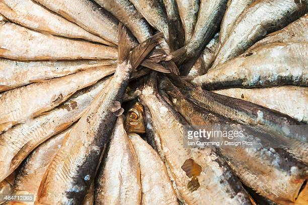 Salted Fish On Display For Sale In The Mercado Central