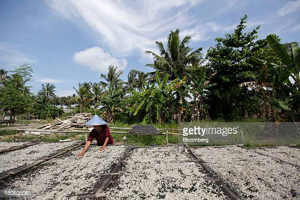 Saltedfish are laid out for drying in Pangkal Pinang Bangka Island Indonesia on Thursday July 19 2012 In recent years about onethird of all the tin...