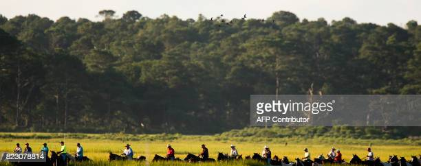 Saltwater Cowboys drive Assateague wild ponies through high grass on the r way to the Assateague Channel during the annual Chincoteague Island Pony...