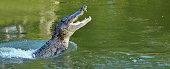 Es Schwimmt Auf Dem Nil Ein Großes Grünes Krokodil