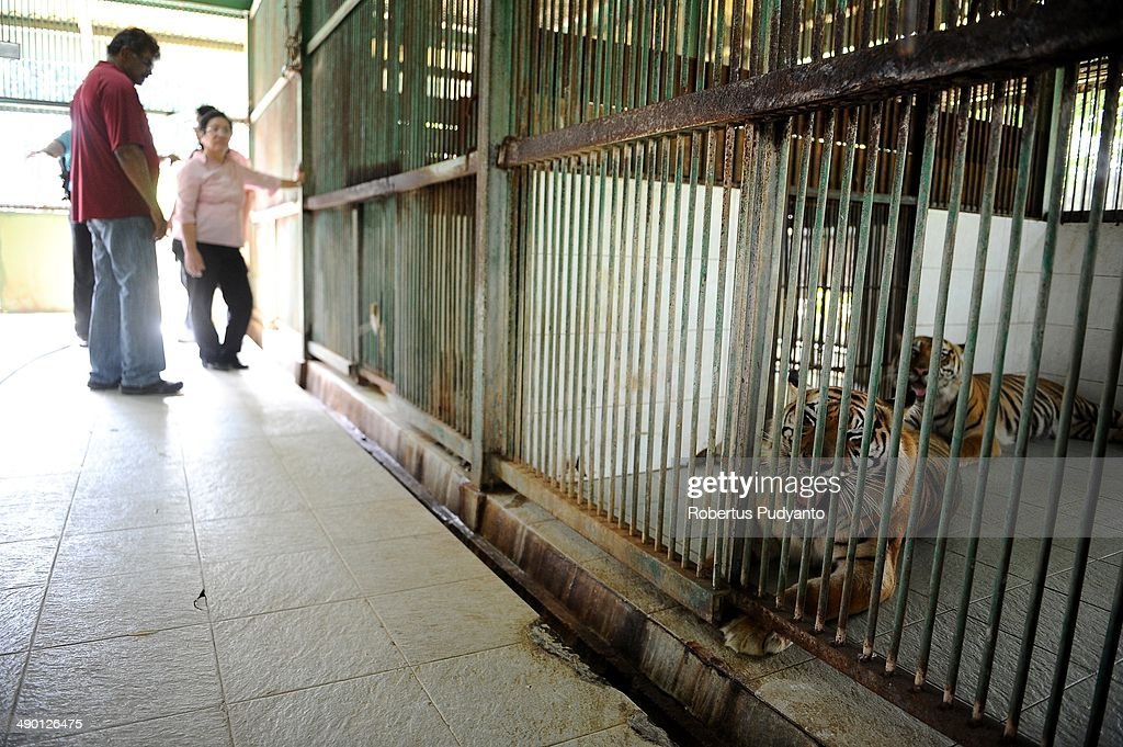 Sam Alagappasamy Chelleiyah and Dr Liang Kaspe inspect the place where a lion died 5 months ago at Surabaya Zoo on May 13 2014 in Surabaya Indonesia...