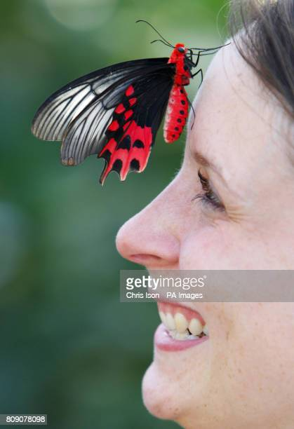 Samantha Bevington gets a close look at a Big Billy butterfly at the RHS Garden Wisley near Woking in Surrey Over 1000 butterflies will be taking up...