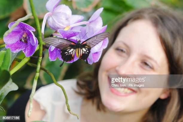 Samantha Bevington gets a close look at a butterfly on an orchid at the RHS Garden Wisley near Woking in Surrey Over 1000 butterflies will be taking...
