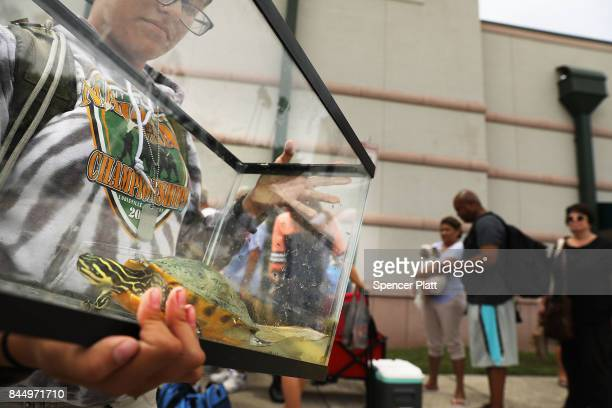 Samantha Casal arrives with her turtle Bubby at a shelter at Alico Arena where thousands of Floridians are hoping to ride out Hurricane Irma on...
