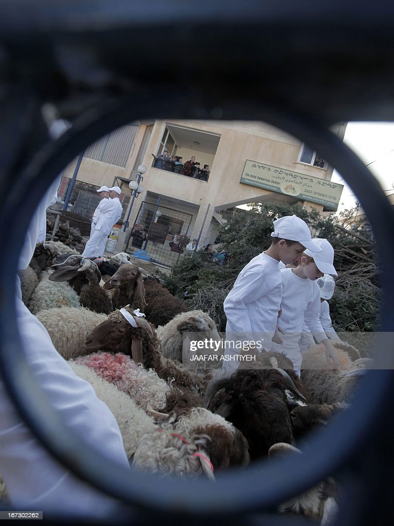 Samaritan children herd sheep and goats for slaughter during the traditional Passover sacrifice ceremony at Mount Gerizim near the northern West Bank city of Nablus on April 23, 2013. The Israeli Samaritan community which numbers about 720 people practice a religion that is based on four principles of faith, one God - the God of Israel; one Prophet - Moses Ben Amram; the belief in the Torah - the first five books of the Bible and one holy place - Mount Gerizim, close to Tel Aviv in Israel.