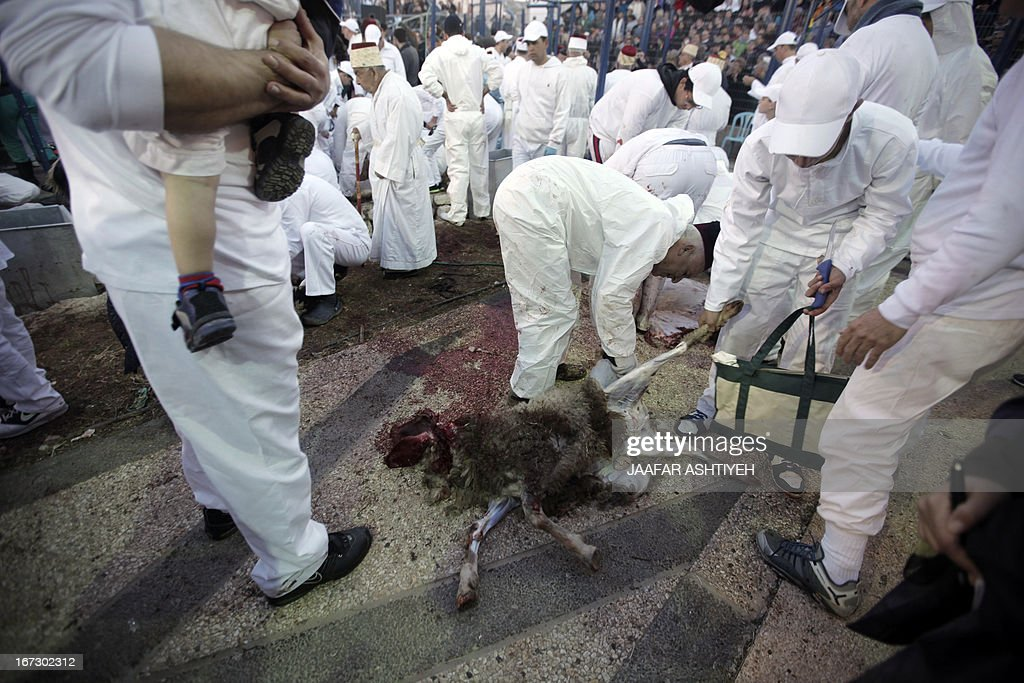 Samaritans slaughter sheep and goats during the traditional Passover sacrifice ceremony at Mount Gerizim near the northern West Bank city of Nablus on April 23, 2013. The Israeli Samaritan community which numbers about 720 people practice a religion that is based on four principles of faith, one God - the God of Israel; one Prophet - Moses Ben Amram; the belief in the Torah - the first five books of the Bible and one holy place - Mount Gerizim, close to Tel Aviv in Israel.